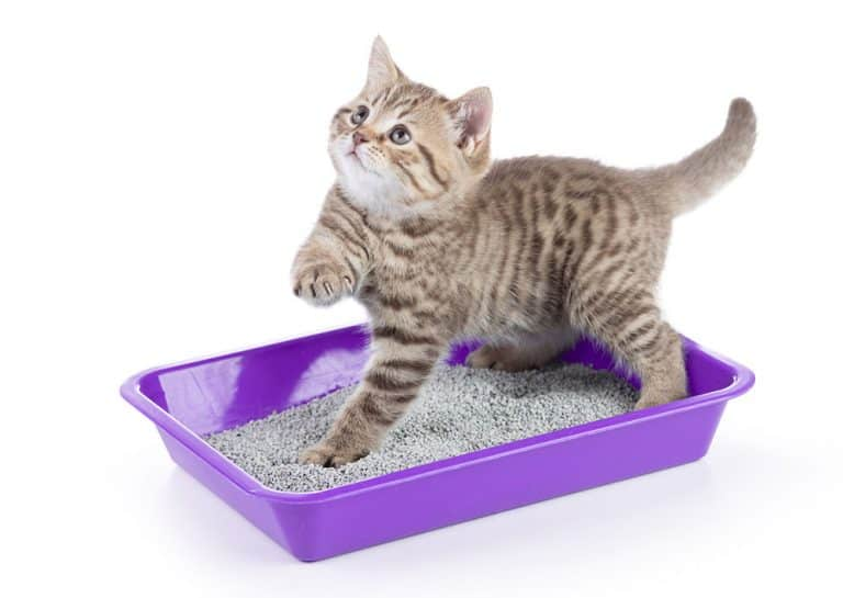 How to Choose a Litter Box for Your Cat