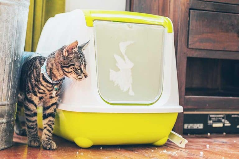 Do Cats like Covered Litter Boxes?