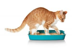My Cat Scratches the Sides of the Litter Box – What to Do?