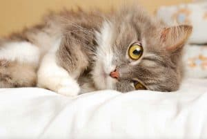 What's The Best Litter Box for Senior Cats