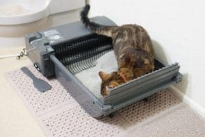 How Much Does an Automatic Litter Box Cost?