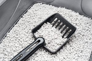 """27 Litter Box Cleaning Hacks that Will Make You Go """"Wow!"""""""