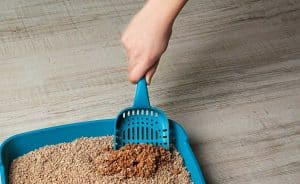 Can You Hire Someone to Clean the Litter Box?