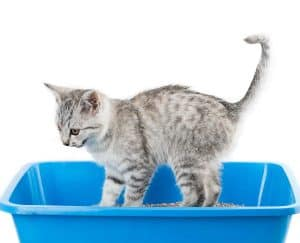 Why Does My Cat Meow When Going to the Litter Box?