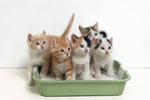 Will My Cats Share a Litter Box?