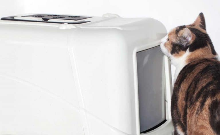 9 White Litter Boxes To Match Any Home Decor Theme