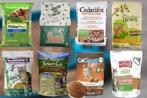 8 Types of Biodegradable Cat Litter (Including Pros and Cons)