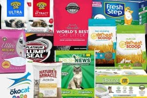 Top 15 Cat Litter Brands in 2019 (Including Reviews and Links)