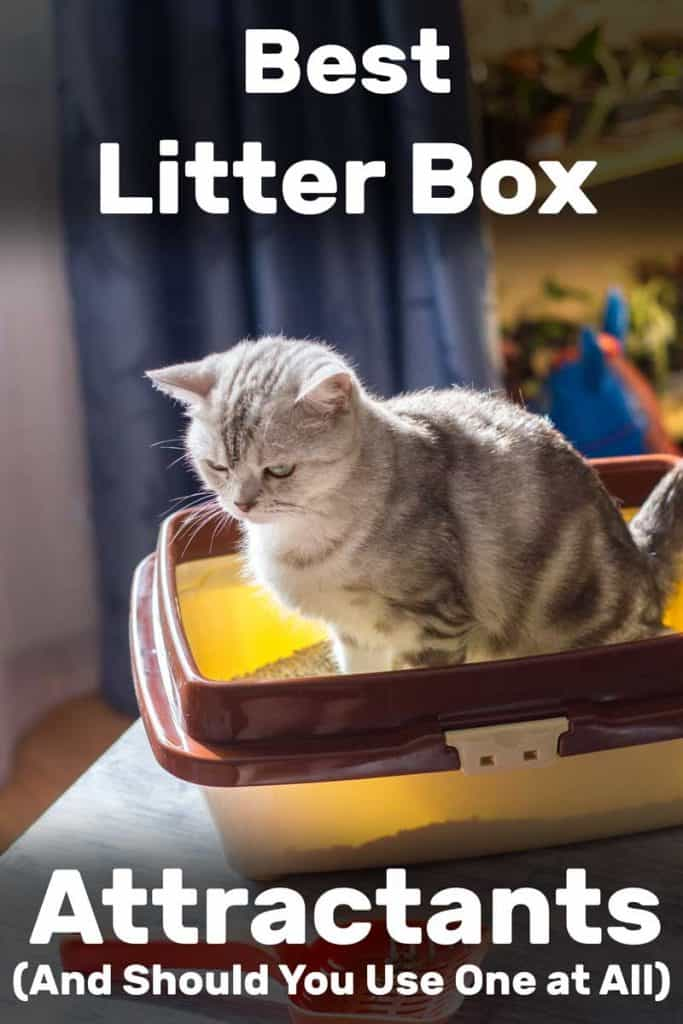 Best Litter Box Attractants (And Should You Use One at All)