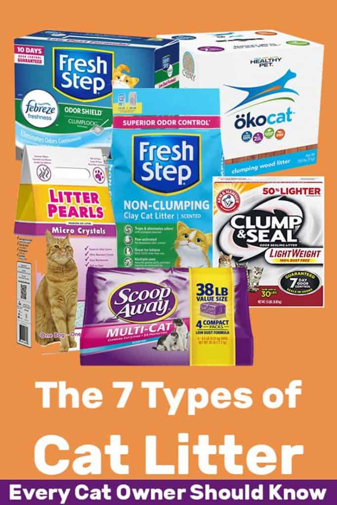 The 7 Types of Cat Litter Every Cat Owner Must Know