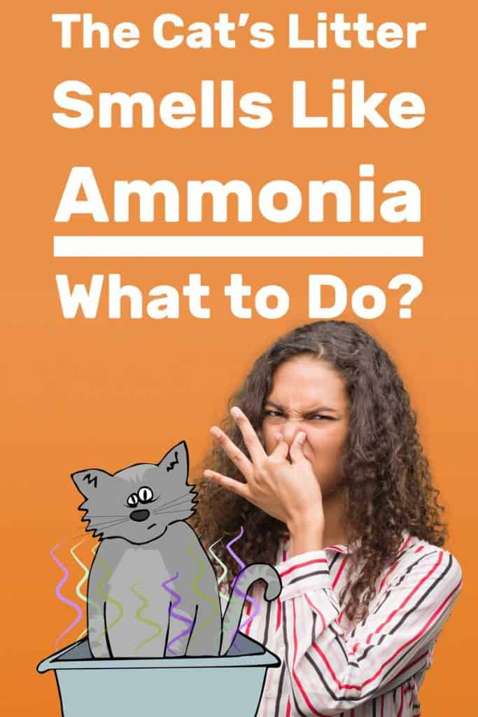 The Cat's Litter Smells Like Ammonia - What to Do?